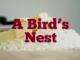 A Bird's Nest